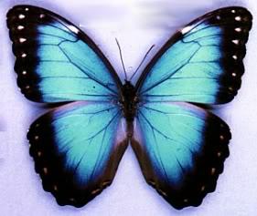 20100119223231-mariposas.jpg